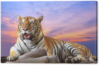 Canvas Print Tiger looking something on the rock with beautiful sky at sunset