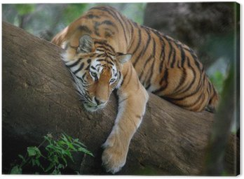 Canvas Print Tiger on tree