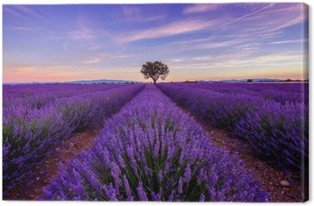 Tree in lavender field at sunrise in Provence, France Canvas Print