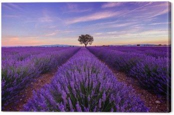 Canvas Print Tree in lavender field at sunrise in Provence, France