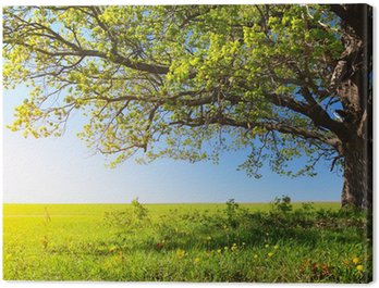 Canvas Print Tree