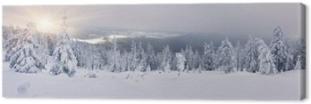 Canvas Print Trees covered with hoarfrost and snow in mountains