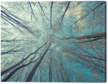 Canvas Print Trees Web Background