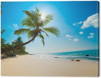 Canvas Print Tropical beach