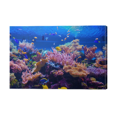 tropical fish on a coral reef Canvas Print • Pixers® • We ...