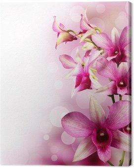 Canvas Print tropical orchids