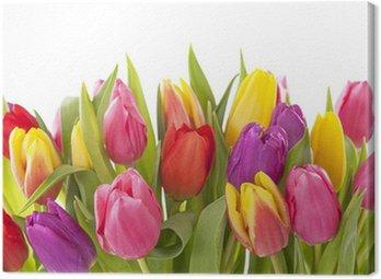Canvas Print Tulip flowers