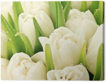 Tulipany Canvas Print