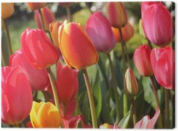 Canvas Print Tulipes