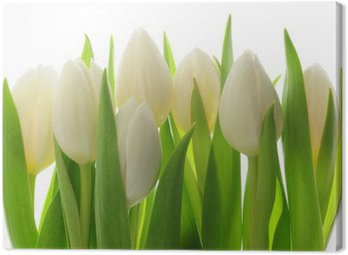 Canvas Print Tulips