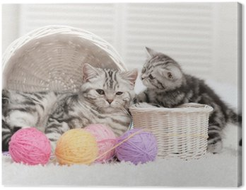 Two cats in a basket with balls of yarn Canvas Print