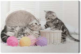 Two cats in a basket with balls of yarn