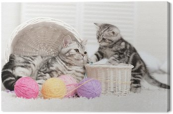 Canvas Print Two cats in a basket with balls of yarn