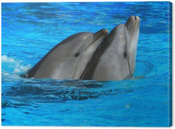 Canvas Print two dolphins