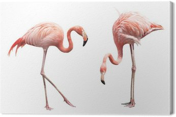 Canvas Print Two flamingo