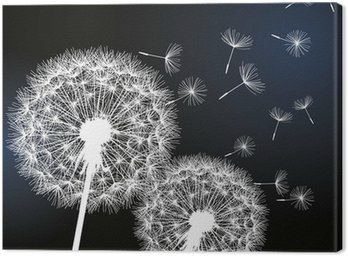 Two flowers dandelions on black background Canvas Print