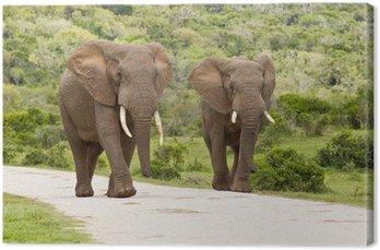 Two large elephants Canvas Print