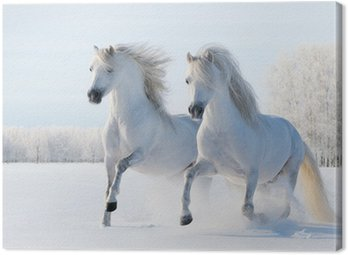 Canvas Print Two white horses gallop on snow field