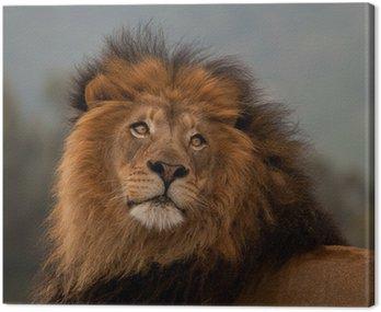 unique lion portrait Canvas Print