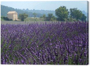 valensole provenza francia campi di lavanda fiorita Canvas Print