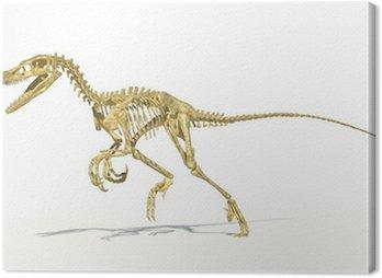 Velociraptor dinosaur, full skeleton scientifically correct, per
