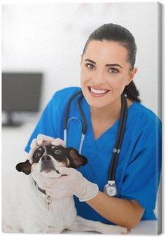 vet nurse checking pet dog eyes