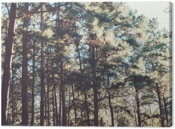 vintage nature background of forest pine tree.
