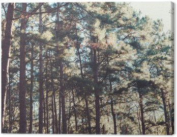 Canvas Print vintage nature background of forest pine tree.