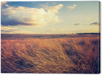 Vintage photo of withered grassland