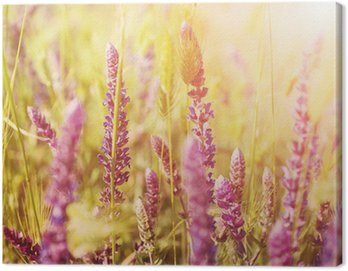 Canvas Print Violet meadow flower