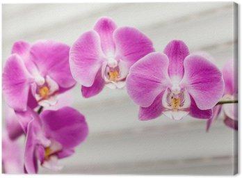 violet orchid flower Canvas Print
