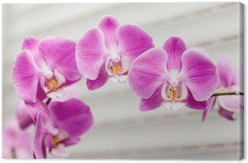 Canvas Print violet orchid flower