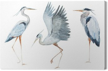 Watercolor heron birds