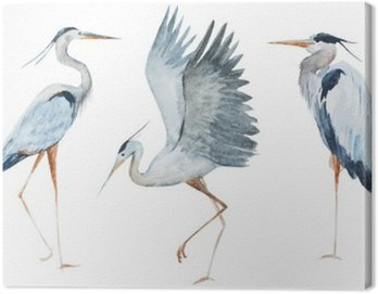 Canvas Print Watercolor heron birds