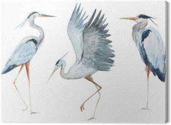 Watercolor heron birds Canvas Print