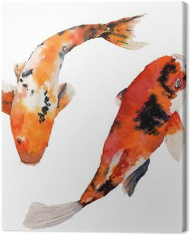 Watercolor oriental rainbow carp set. Koi fishes isolated on white background. Underwater illustration for design, background or fabric