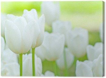 Weisse Tulpen Canvas Print