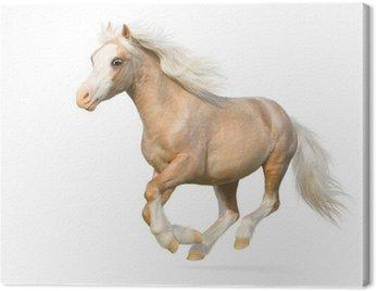 Canvas Print Welsh pony gallops