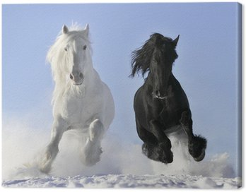 white and black horse Canvas Print