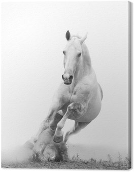 Canvas Print white horse