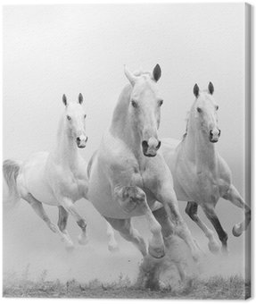 Canvas Print white horses in dust