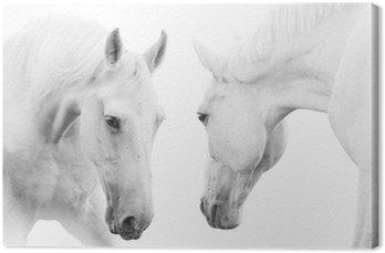 Canvas Print white horses