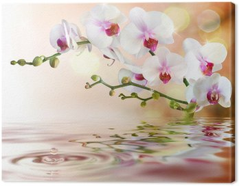 Canvas Print white orchids on water with drop