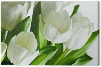 Canvas Print White Tulips