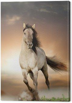 Canvas Print wild stallion running in sunset