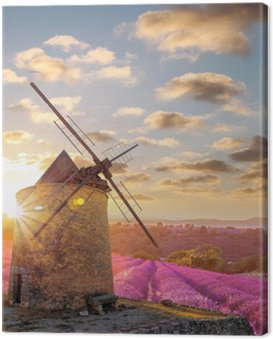 Canvas Print Windmill with levander field against colorful sunset in Provence, France