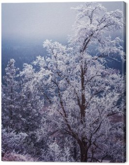 Winter and frost on trees in Spokane