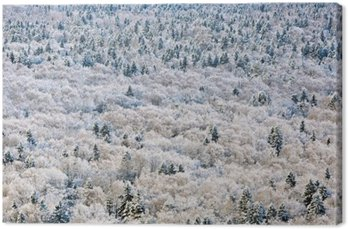 Winter forest, Tver region, Russia.