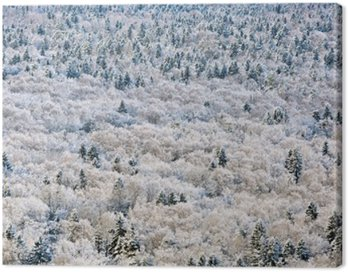 Canvas Print Winter forest, Tver region, Russia.