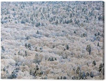 Winter forest, Tver region, Russia.